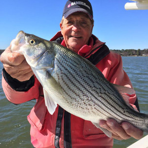 Capt. Gus holds a Lake Norman hybrid striped bass.
